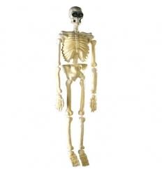 Esqueleto calavera fluorescente